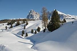 Fischbachl Seiseralm Südtirol.JPG