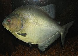 Fish at Louisville Zoo.jpg