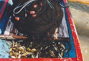 Fish in a fishingboat in Bali Indonesia.jpg