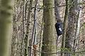Fledermauskasten im NSG Eldena.jpg
