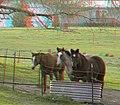 Flickr - jimf0390 - JimF 04-13-10-0013b horses.jpg