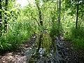 Flooded path in the Teufelsbruch swamp 8.jpg