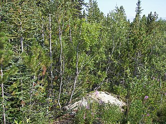 Flora on Klondike Highway, British Columbia.jpg