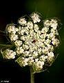 """Floral 08 """"hemlock"""".jpg"""