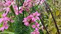 Flower 140 (15882168326).jpg