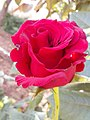 Flower 80.jpg