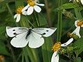 Flower Lover (16581252776).jpg