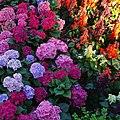 Flower beds clash.jpg