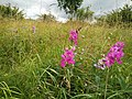 Flower in highfield country park.jpg