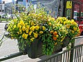 Flower planter on fence, Walthamstow Avenue, London Borough of Waltham Forest, England 02.jpg