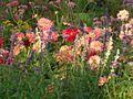Flowers in the Jardin du Luxembourg.jpg
