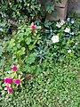 Flowers of Baghdad 3.jpg
