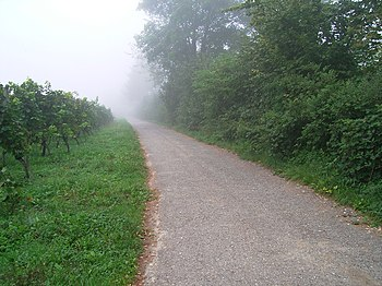 Fog in the Vineyards.jpg