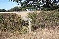 Footbridge near New Luckhurst Farm - geograph.org.uk - 1524300.jpg