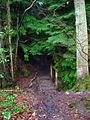 Footbridge over Unnamed Stream, Milldown Wood - geograph.org.uk - 335210.jpg
