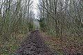 Footpath through Northfield Plantation, Abbotstone Down - geograph.org.uk - 304521.jpg
