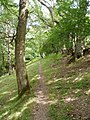 Footpath through the woods. - geograph.org.uk - 206750.jpg