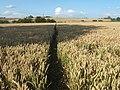 Footpath towards Graveney Hill - geograph.org.uk - 1417991.jpg