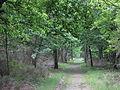 Forêt de Buzet 2014-05-08T14-20-36.jpg