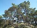 Forêt de Suzac (3).JPG