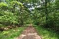 Forêt domaniale de Bois-d'Arcy 46.jpg