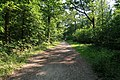 Forêt domaniale de Bois-d'Arcy 64.jpg