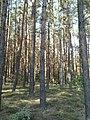 Forest9.jpg