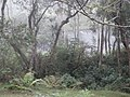 Forest (124168887).jpeg