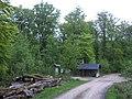 Forest - panoramio (27).jpg