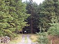 Forest Entrance - geograph.org.uk - 49735.jpg