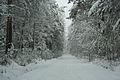 Forest near Ob river in Altai Region 40.JPG