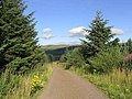 Forestry road in Leithope Forest - geograph.org.uk - 543424.jpg
