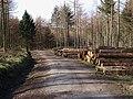 Forestry work - geograph.org.uk - 717880.jpg
