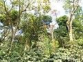 Forests of Western Ghats at Hornadu 01.JPG