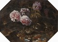 Frogs, Wild Roses, Shells and Butterflies (Paolo Porpora) - Nationalmuseum - 22321.tif