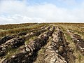 Furrows on Raes Knowes - geograph.org.uk - 736450.jpg