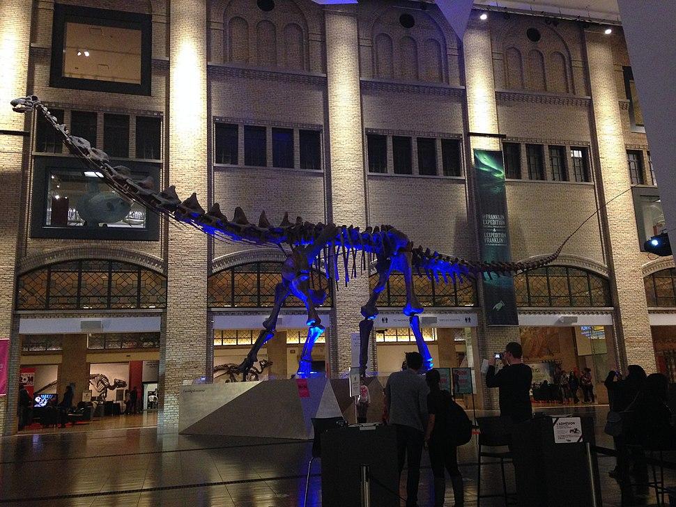 Futalognkosaurus Royal Ontario Museum