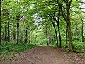 GOC Tring & Wendover Woods 034 Wendover Woods, Halton (33947206173).jpg