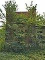 Garden greenhouse in Mārciena Manor (3).jpg
