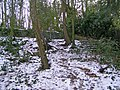 Garden remains - geograph.org.uk - 2211122.jpg