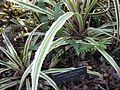 Gardenology-IMG 5068 hunt10mar.jpg