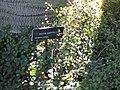 Gardenology.org-IMG 0274 hunt07mar.jpg