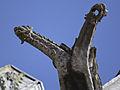 Gargoyle Saint-Ouen 04.jpg