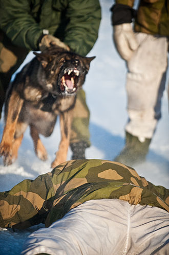 Dogs in warfare - Dog of the Garrison of Sør-Varanger during a simulated arrest