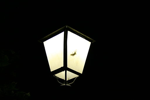Gecko in lamp by night