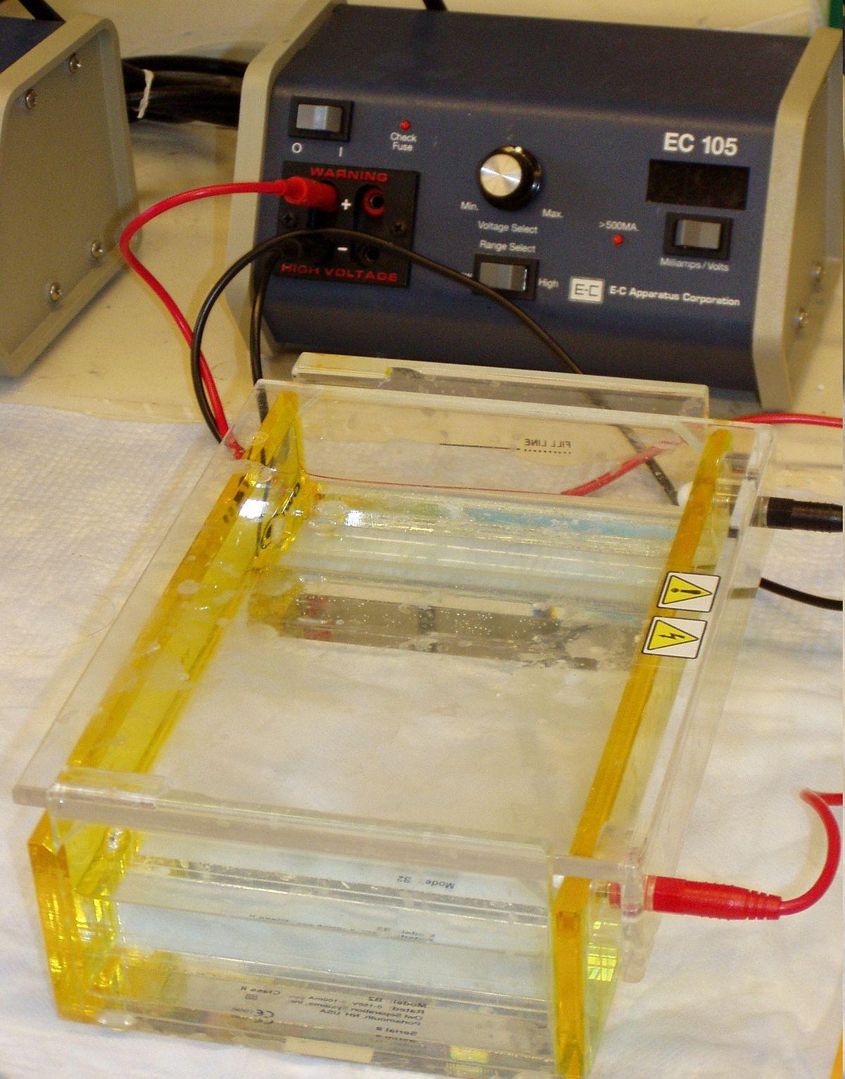 Gel electrophoresis - Wikipedia