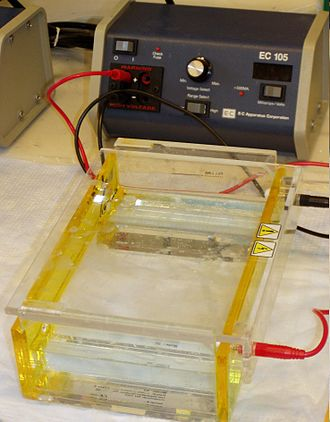 Gel electrophoresis - Gel electrophoresis apparatus – an agarose gel is placed in this buffer-filled box and an electrical field is applied via the power supply to the rear. The negative terminal is at the far end (black wire), so DNA migrates toward the positively charged anode (red wire).