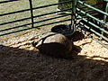 Georgia National Fair 2014 023.JPG