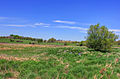 Gfp-wisconsin-madison-landscape-of-sky-and-grassland.jpg