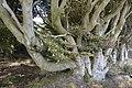 Gnarled Tree Trunks - geograph.org.uk - 1518276.jpg
